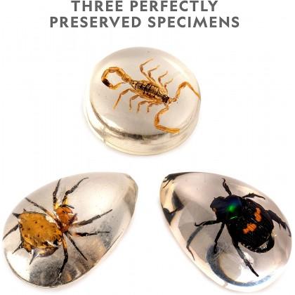 NATIONAL GEOGRAPHIC   Real Bug Dig Kit (Genuine Bug Specimens Inside)   STEM Scientific Educational Toys For Boys Girls Kids